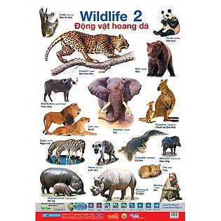 Poster Lớn - Động Vật Hoang Dã 2