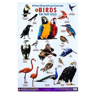 Bé Học Tiếng Anh Qua Hình Ảnh - Các Loài Chim
