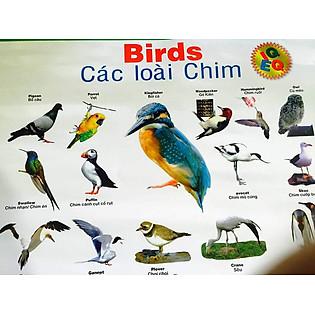 Tranh Treo Tường Cho Bé - Các Loài Chim