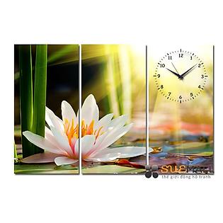 Tranh Đồng Hồ Suemall HL140705 - Hoa Súng Trắng