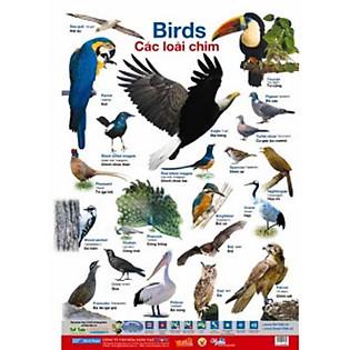 Poster Lớn - Các Loài Chim