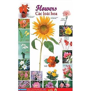 Poster Lớn - Flowers 1: Các Loài Hoa