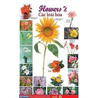 Poster Lớn - Flowers 2: Các Loài Hoa