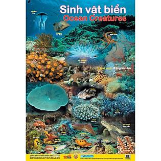 Poster Lớn - Sinh Vật Biển