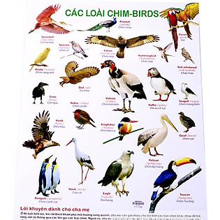 Poster - Các Loài Chim