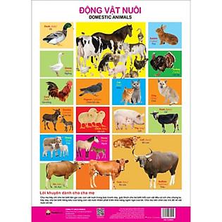 Poster - Động Vật Nuôi