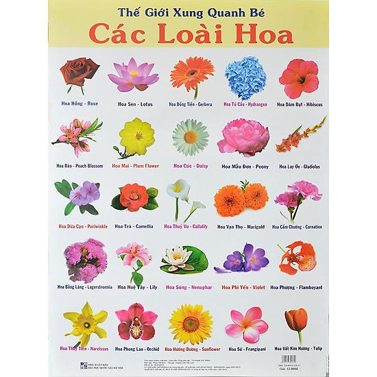 Poster Lớn – Các Loài Hoa