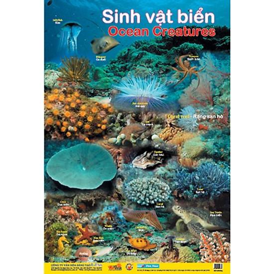 Poster Lớn - Sinh Vật Biển (Tái Bản)
