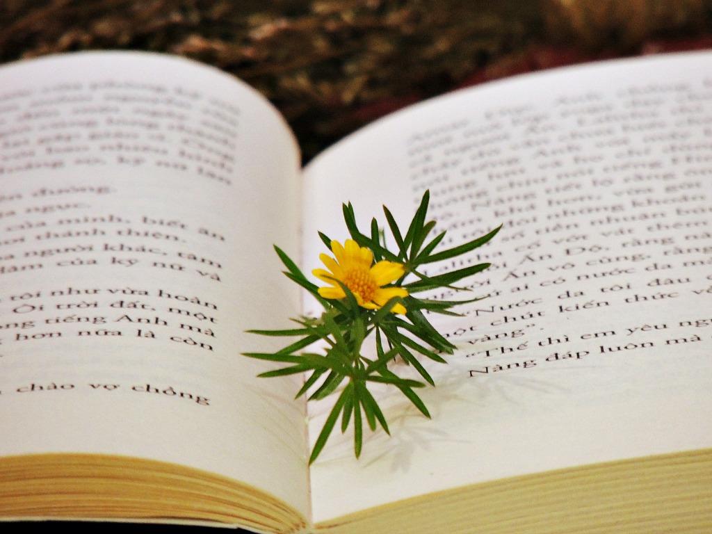 HiHi books