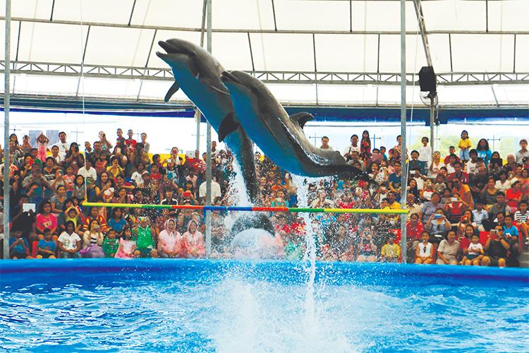 Vé Dolphins Bay Nemo Phuket, Thái Lan - Ghế Thường