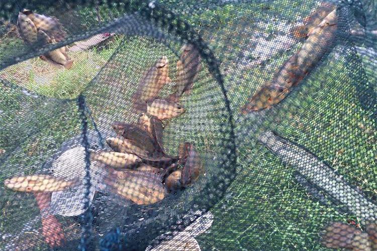 Chụp Đánh Bắt Cá 8 Cửa