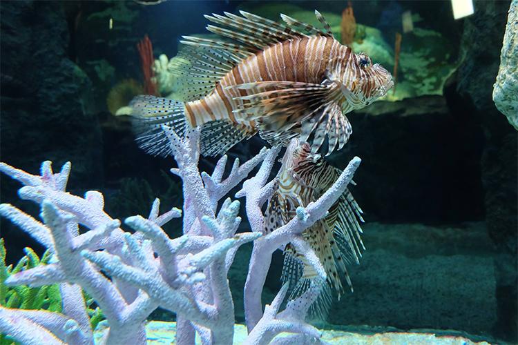 Vé Thủy Cung Underwater World Ở Pattaya, Thái Lan